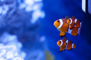 Aquarium biological filter enviropacs for Cloudy fish tank water in established tank