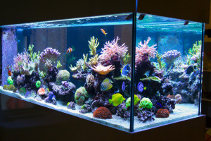 Aquarium in livingroom